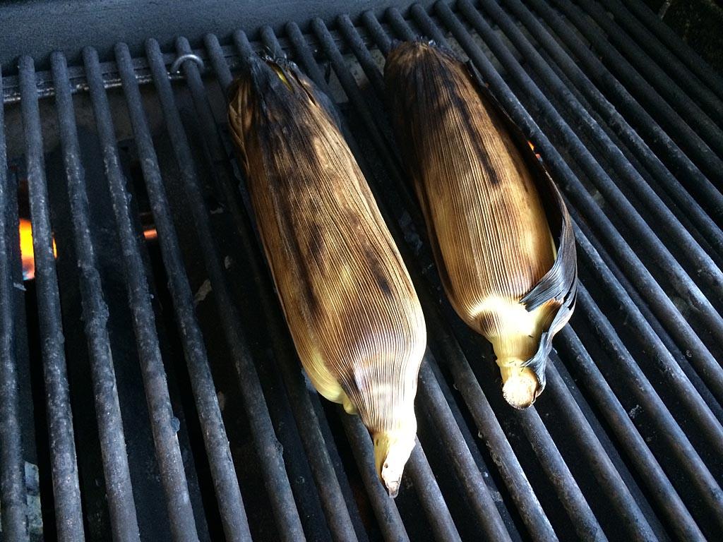 Corn ready to be shucked