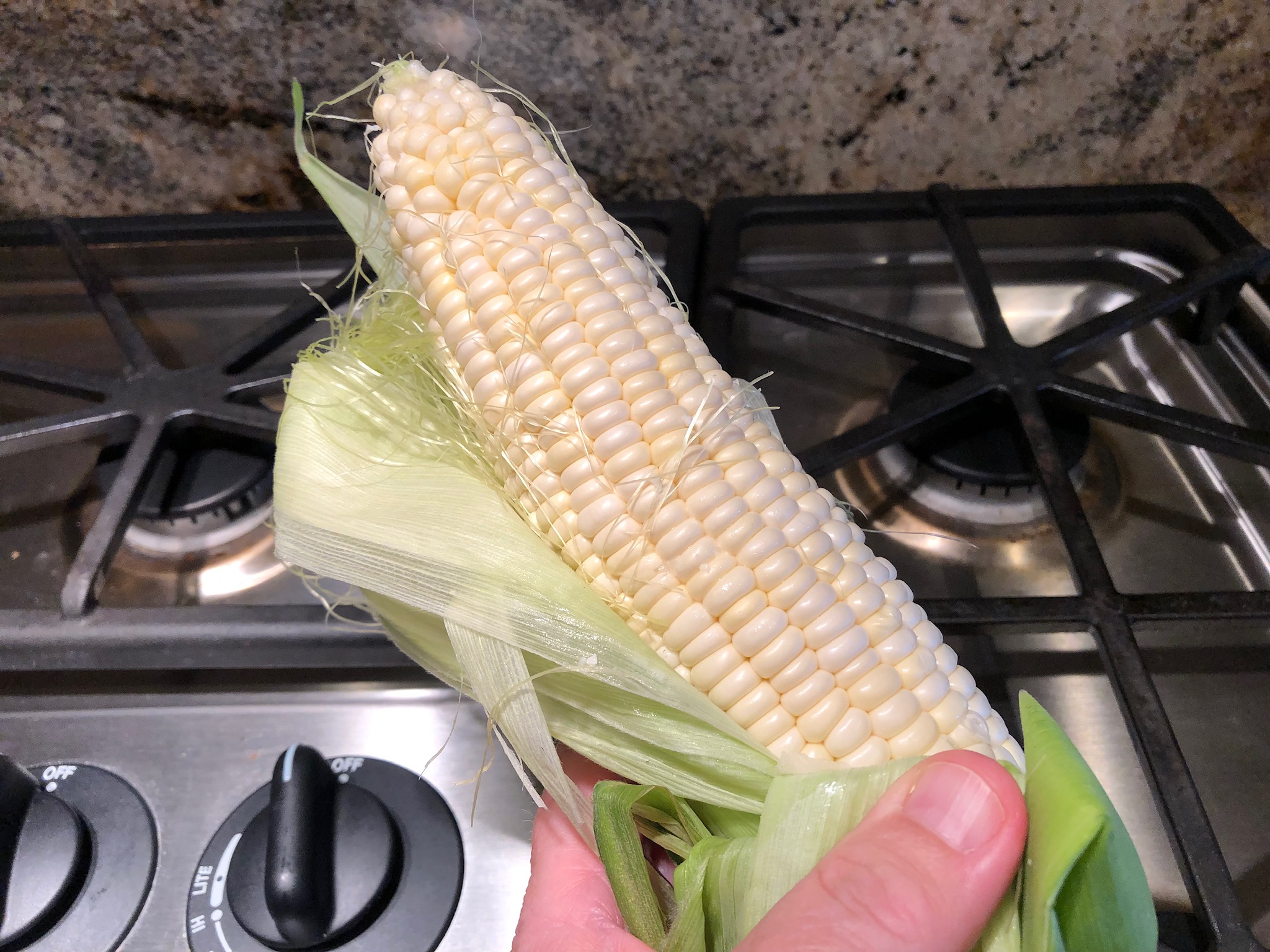 Fresh white corn on the cob in the husk